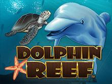 Слоты онлайн получай денежки Риф Дельфина